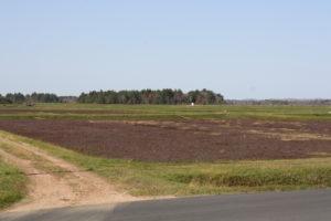 plantacja żurawiny, uprawa żurawiny